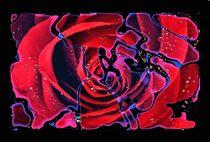Rosen Labyrinth von foryou