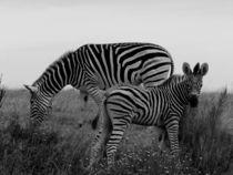 Zebras (b & w) von moyo