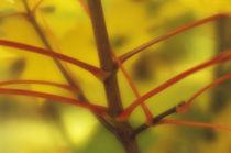 Autumn leaves, macro von Alexander Kurlovich