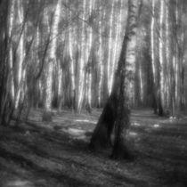 Landscape with birch trees von Alexander Kurlovich