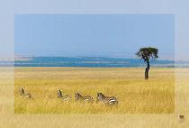 Zebras in der Massai Mara von Ines Schmelzer