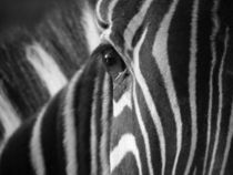 Stripes by clichefotos