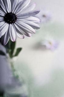 Blütenspitzen von Josephine Mayer-Hartmann