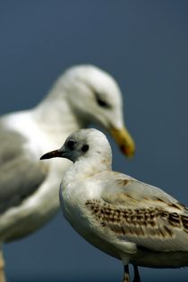 seagulls // Möwen by mateart