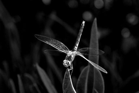 Libelle-2015-002-6000sw2