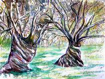 Olivenbäume von Irina Usova