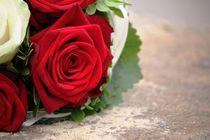 Rote Rose von Nicole Gruhn