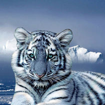 Blue White Tiger by Erika Kaisersot