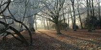 Schatten im Wald by Rolf Müller