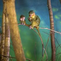 Liebevolle Affenmutter kümmert sich um ihr Kind von Gina Koch