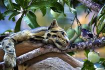 Ozelot im Mangobaum mit einem Vogel by Gina Koch
