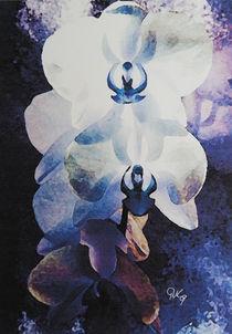 Weiße Orchidee von gnk-art