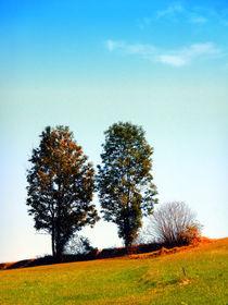 Baumzwillinge und ein Busch von Patrick Jobst