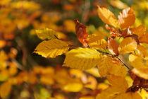 Herbst / 1 von Heidi Bollich