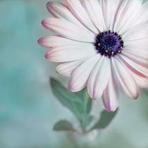Blütenspitzen I by Josephine Mayer-Hartmann