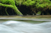 Radix and River von Thomas Matzl