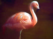 Flamingo dream von sharon lisa clarke