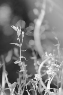 Zweite Reihe by © Ivonne Wentzler