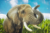 Elefant im Maisfeld by AD DESIGN Photo + PhotoArt