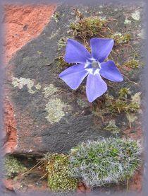Blaue Blüte by Angelika  Schütgens