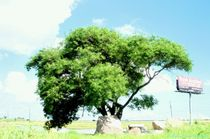 Tree1c