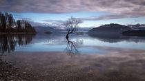 Einsamer Baum im Lake Wanaka, Neuseeland von Sebastian Warneke