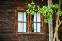Der Baum vorm Fenster von haldenslebener