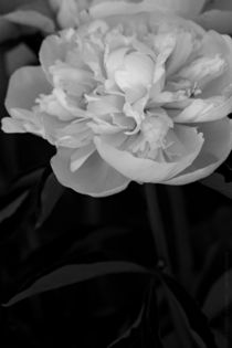 Blueten - zwei by chrisphoto