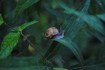 Snail, 2015 by Caitlin McGee