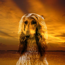 Dog and Sunset by Erika Kaisersot