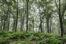 A Summer Day in the Forest von Marc Garrido Clotet
