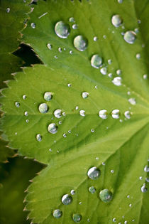 rain on leaf by Amber D Hathaway Photography