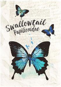 Swallowtail-c-sybillesterk