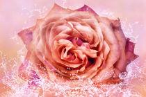 Rosenblüte im Wasser von darlya