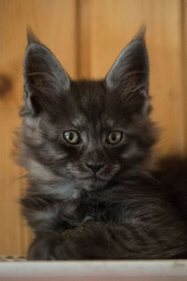 Katze  by Caren Kluth