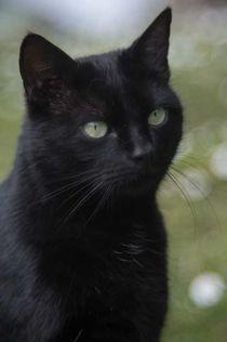Katze - cat von Caren Kluth