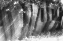 Rhythm and light von Alexander Kurlovich
