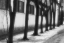 Rhythm of trees von Alexander Kurlovich