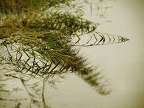 Spätsommerabend am Ufer by crazyneopop