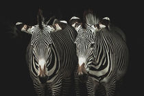 Zebras by anneliese-photography