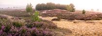 Nemitzer Heide im Morgengrauen by Patrick Klatt