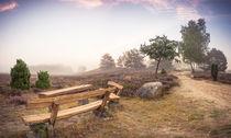 Nemitzer Heide bei Nebel by Patrick Klatt