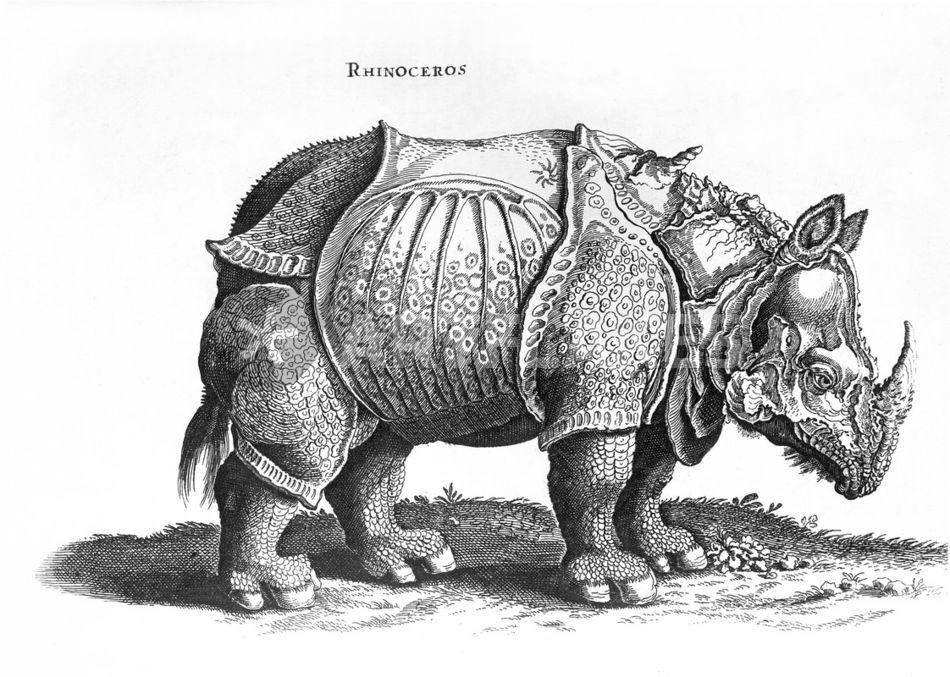 rhinoceros malerei als poster und kunstdruck von albrecht d rer bestellen artflakes com. Black Bedroom Furniture Sets. Home Design Ideas