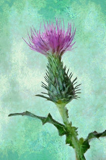 Distel by darlya