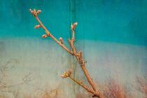 background with peach blossom branch by Serhii Zhukovskyi