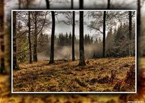 Im Dunst des Waldes von PROtected picture Oppermann