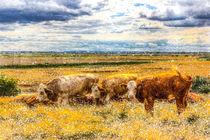 Resting Cows Winter Art by David Pyatt