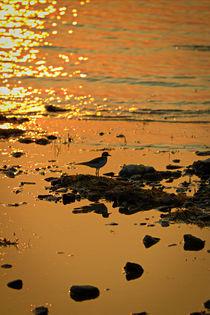 Sunset and Bird von Amber D Hathaway Photography