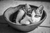 Cat by Lola Pellegrinetti