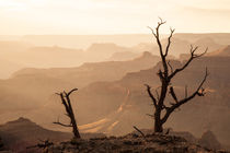 Grand Canyon, Arizona by Jan Schuler